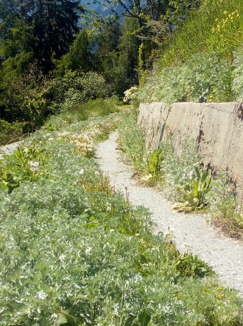 Le chemin de l absinthe chez edelweiss distillerie